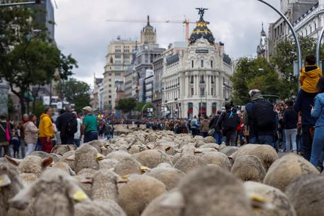 26th Transhumance Festival in Madrid © EPA